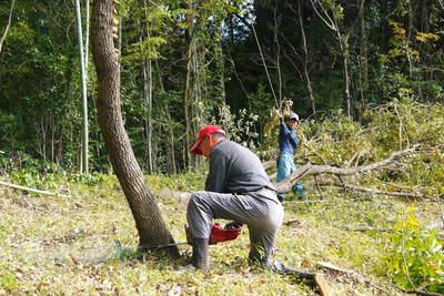 原木しいたけ 平成28年度も11月上旬からの出荷にむけて現在の栽培地の様子と2年間の栽培記録(前編)_a0254656_1821912.jpg
