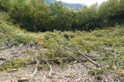 原木しいたけ 平成28年度も11月上旬からの出荷にむけて現在の栽培地の様子と2年間の栽培記録(前編)_a0254656_18252334.jpg
