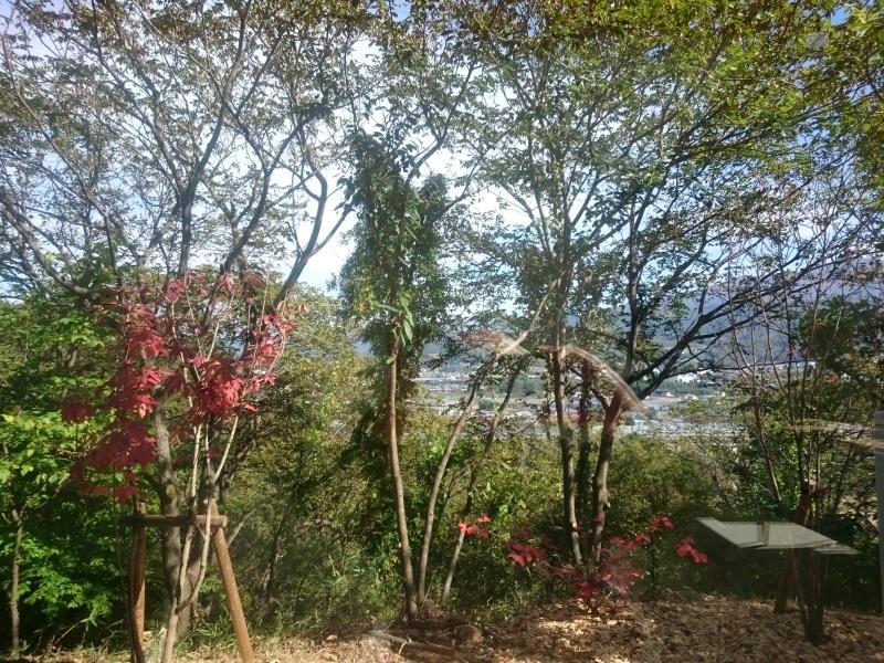 今日のランチはみはらしの丘のエスカルゴ_d0159273_12015250.jpg