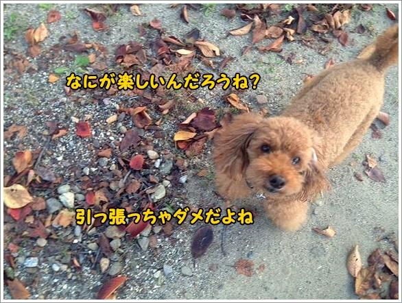 b0111376_1553467.jpg