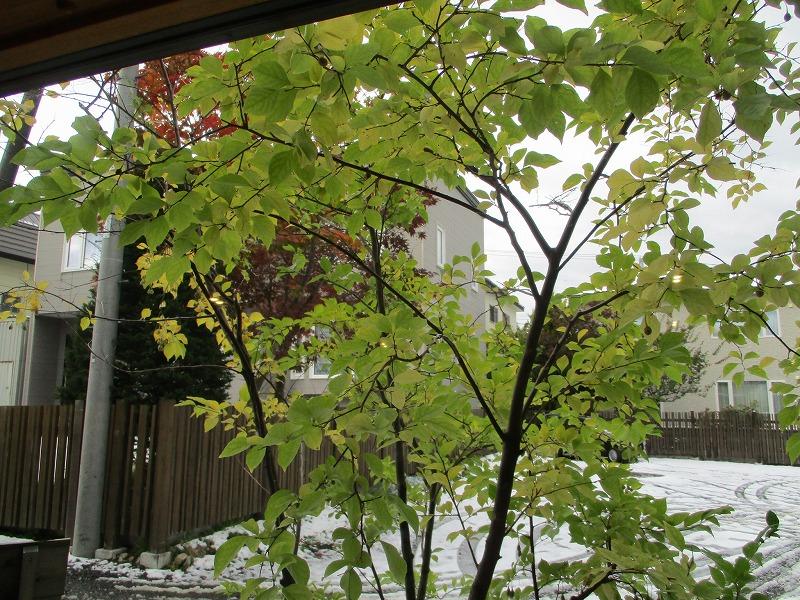 10月25日・・・秋のお菓子_f0202703_130378.jpg