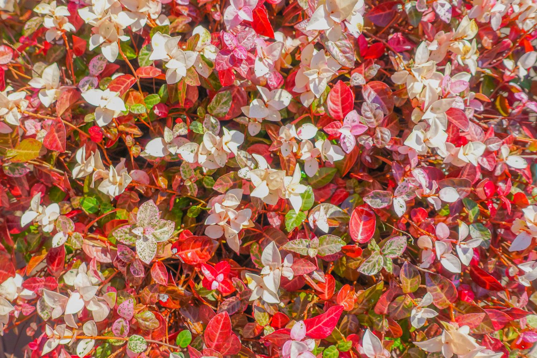 デッキの花かご_c0220824_11270174.jpg