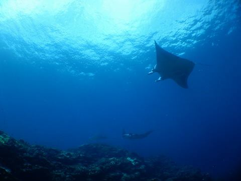 lots of mantas !! _a0189838_175395.jpg