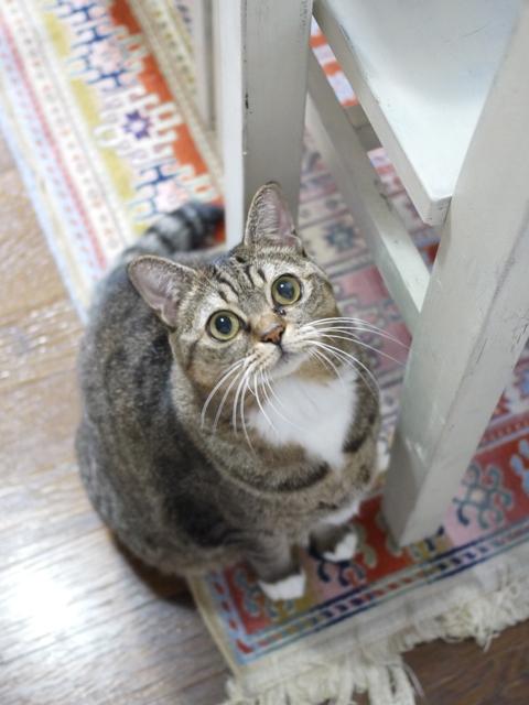 猫のお留守番 ヘプタちゃん編。_a0143140_19263344.jpg