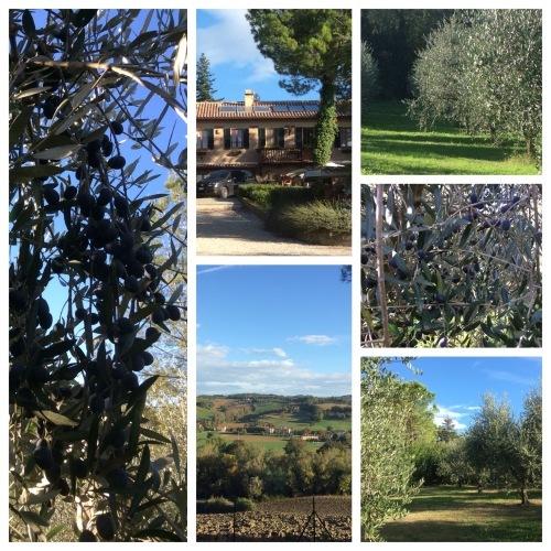 2016年イタリア旅行のご報告 その3_d0128354_16440786.jpg