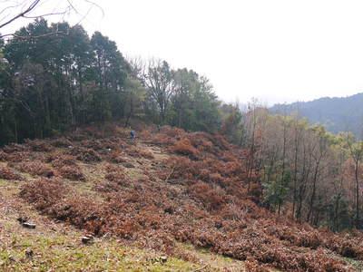 原木しいたけ 平成28年度も11月上旬からの出荷にむけて現在の栽培地の様子と2年間の栽培記録(後編)_a0254656_17185037.jpg