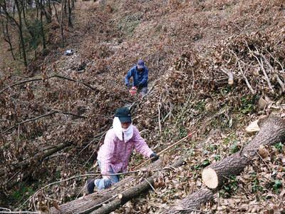 原木しいたけ 平成28年度も11月上旬からの出荷にむけて現在の栽培地の様子と2年間の栽培記録(後編)_a0254656_17403027.jpg