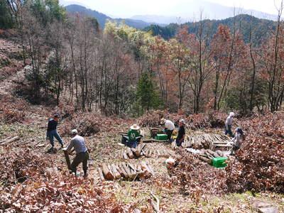 原木しいたけ 平成28年度も11月上旬からの出荷にむけて現在の栽培地の様子と2年間の栽培記録(後編)_a0254656_17565250.jpg