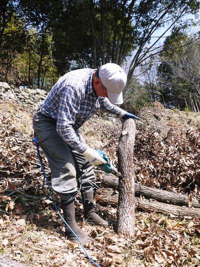 原木しいたけ 平成28年度も11月上旬からの出荷にむけて現在の栽培地の様子と2年間の栽培記録(後編)_a0254656_1805494.jpg