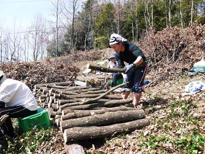原木しいたけ 平成28年度も11月上旬からの出荷にむけて現在の栽培地の様子と2年間の栽培記録(後編)_a0254656_18343347.jpg