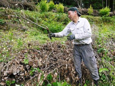原木しいたけ 平成28年度も11月上旬からの出荷にむけて現在の栽培地の様子と2年間の栽培記録(後編)_a0254656_18431859.jpg