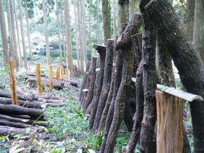 原木しいたけ 平成28年度も11月上旬からの出荷にむけて現在の栽培地の様子と2年間の栽培記録(後編)_a0254656_1913459.jpg