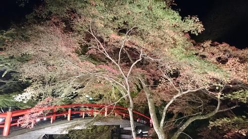 伊香保温泉 河鹿橋ライトアップ_e0160569_11292474.jpg