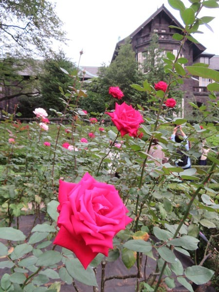 22日の川辺堀之内祭りと旧古河庭園・平塚亭と北とぴあと、日本のサーモン_e0133780_01114941.jpg