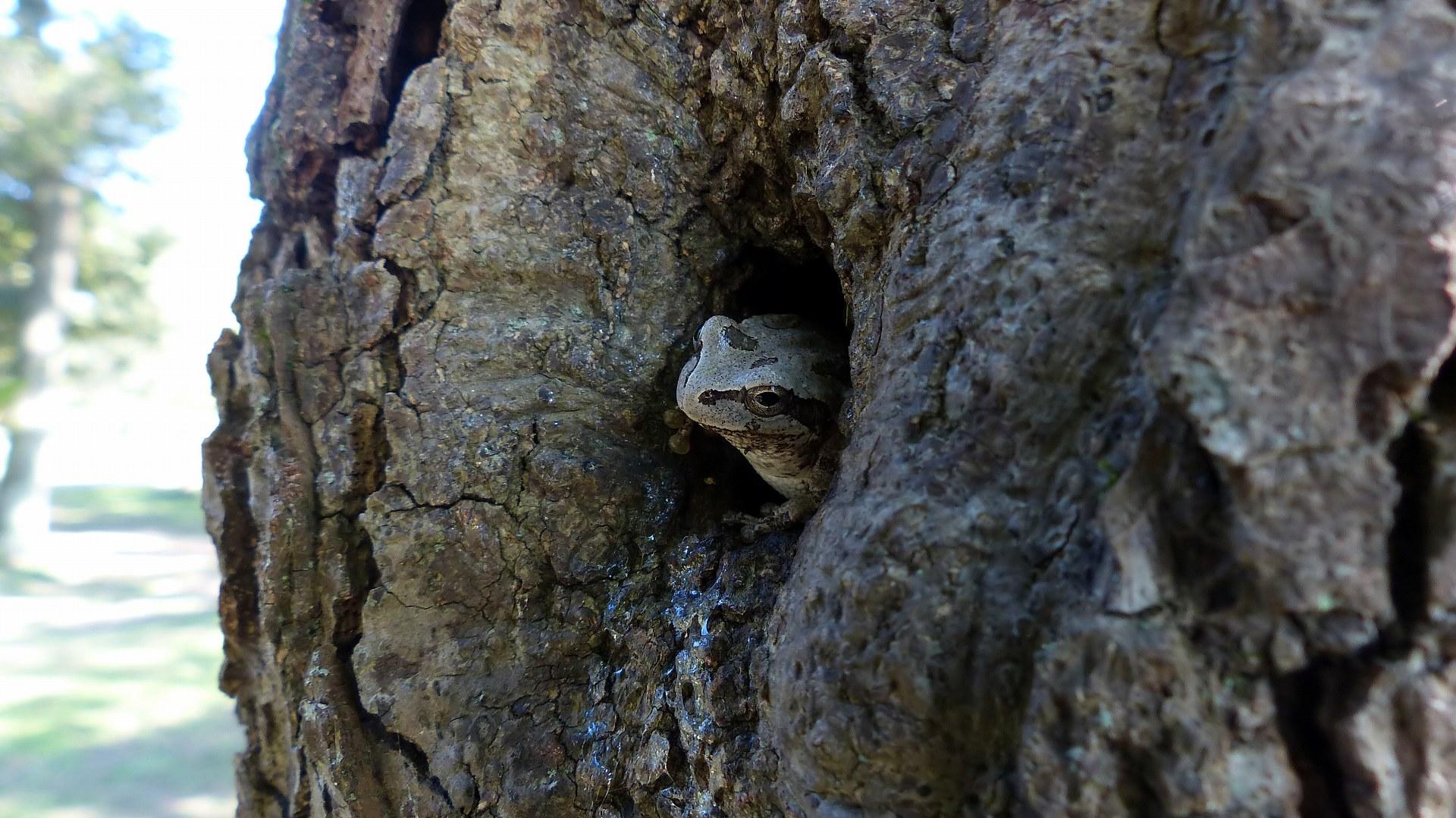 カエルの御宿_a0185081_2144659.jpg
