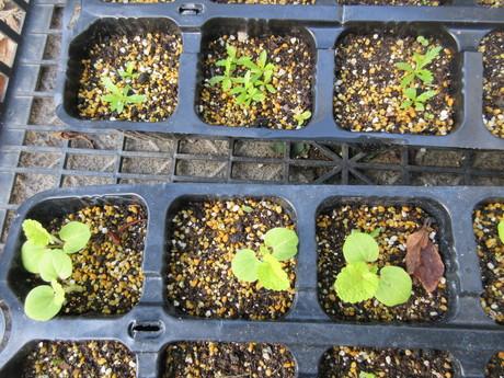 玉葱を植える・花苗を植える・白鳥飛来_a0203003_20251617.jpg