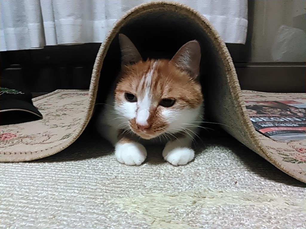 【猫】追いかけられて_f0141609_23105251.jpg