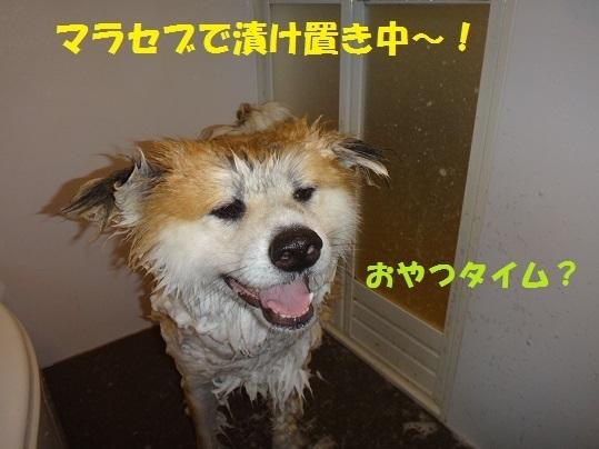 f0121712_15505337.jpg