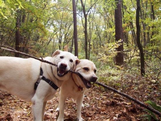 笑顔になるお散歩_e0192217_21275039.jpg