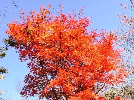 八ヶ岳の旅_f0101226_20362012.jpg