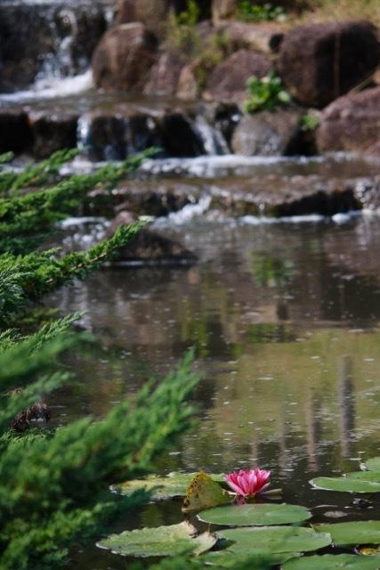 【保土ケ谷公園】_f0348831_21141054.jpg