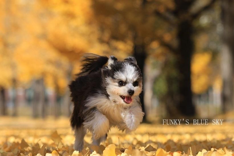 「FUNKY\'S BLUE SKY」のきゃふぁにこ♪さん登場!_c0039735_15031030.jpg