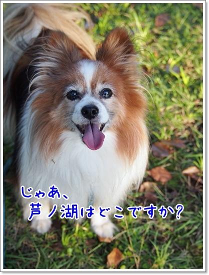 d0013149_00411051.jpg