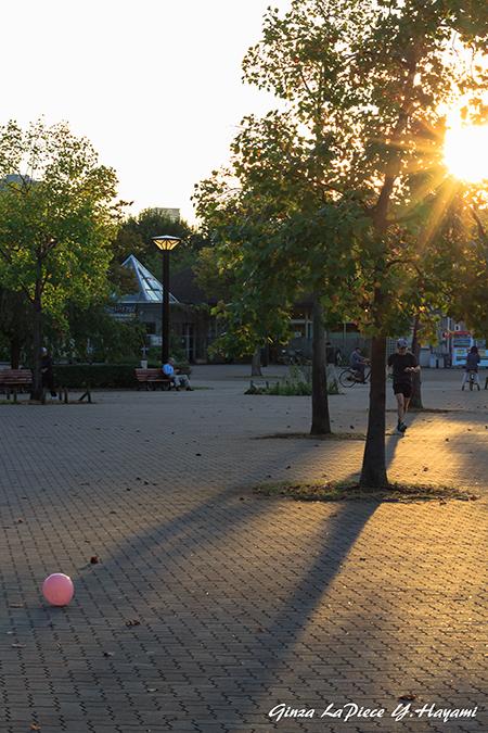 風景の写真 斜光の木場公園_b0133053_00061431.jpg