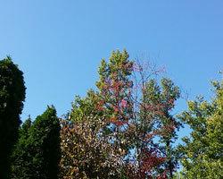 青空と雪虫。_d0050155_11263013.jpg
