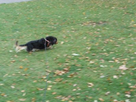 公園散歩!!_b0186183_15413367.jpg
