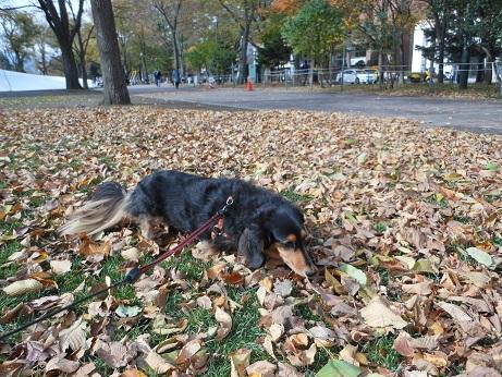 公園散歩!!_b0186183_15444129.jpg
