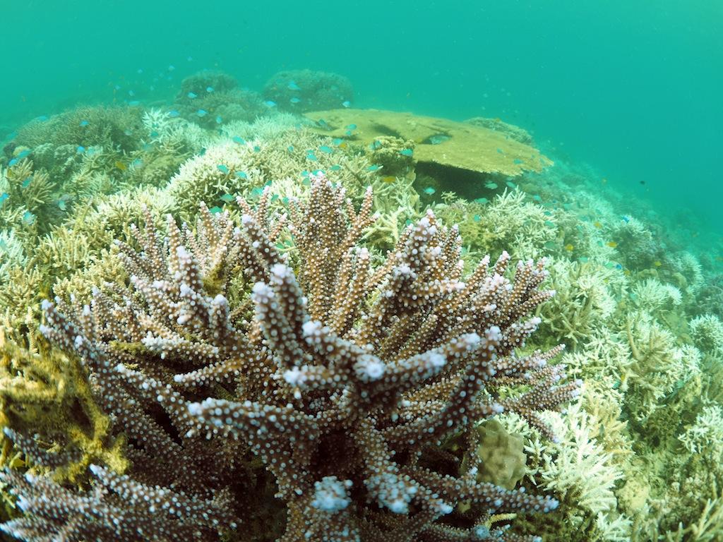 10/1-7 日本造礁サンゴ分類研究会奄美調査_a0010095_0502428.jpg