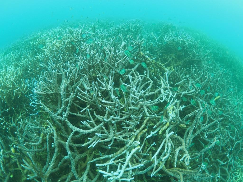 10/1-7 日本造礁サンゴ分類研究会奄美調査_a0010095_0503649.jpg