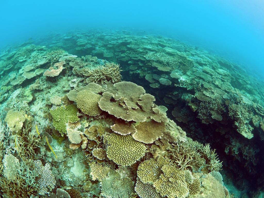 10/1-7 日本造礁サンゴ分類研究会奄美調査_a0010095_0504897.jpg