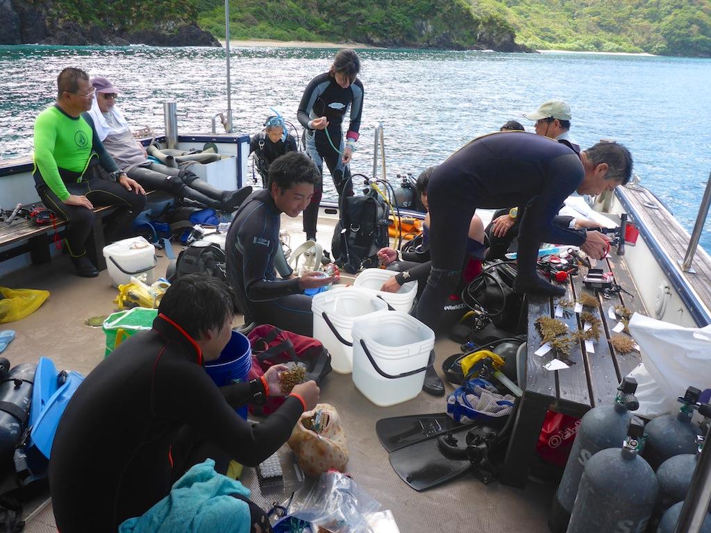 10/1-7 日本造礁サンゴ分類研究会奄美調査_a0010095_051259.jpg