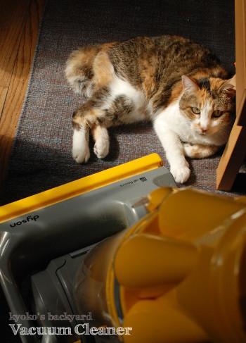 掃除機とSandyの関係_b0253205_04551032.jpg