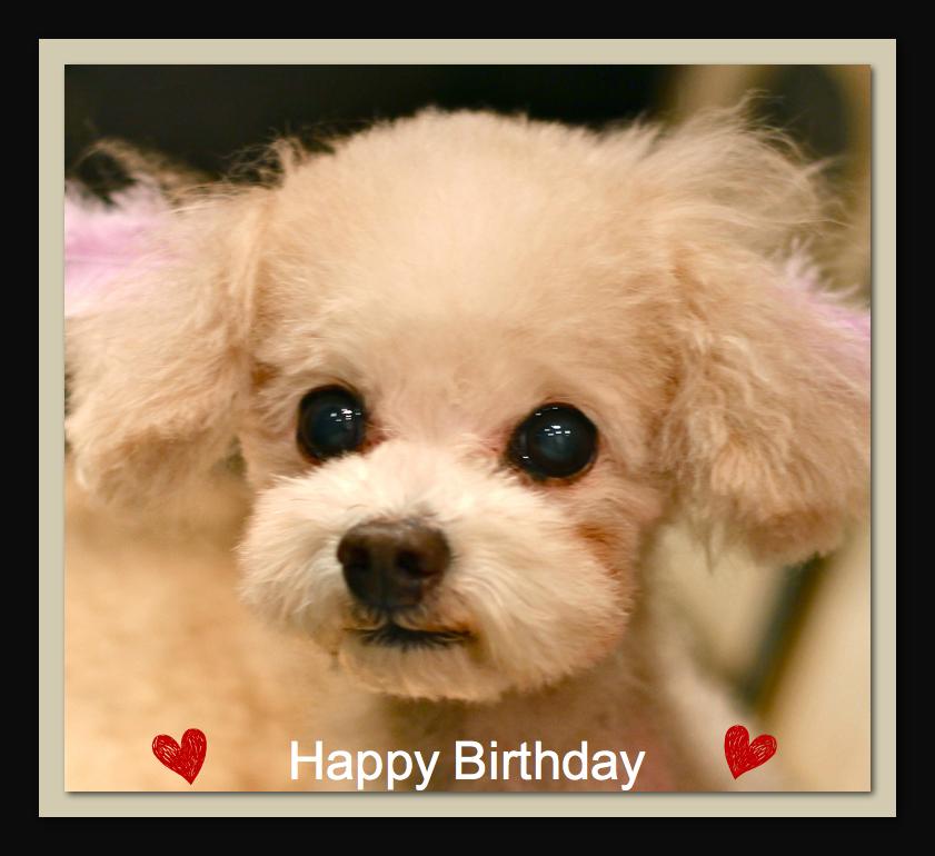 Happy Birthday♡POPくん_d0060413_19503292.jpg