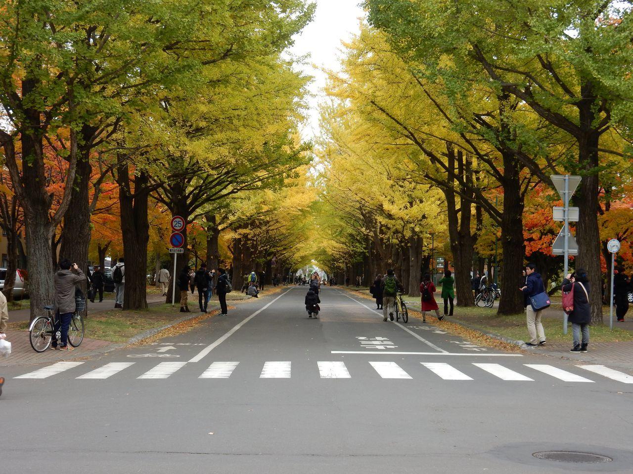 黄葉・紅葉に染まる北海道大学_c0025115_22363157.jpg