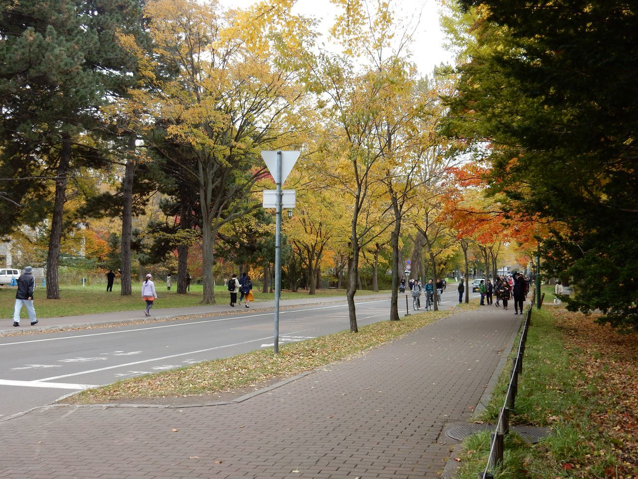 黄葉・紅葉に染まる北海道大学_c0025115_22363780.jpg