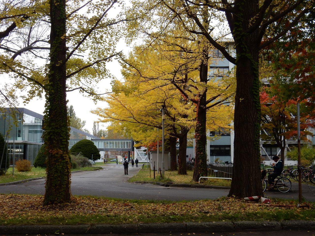 黄葉・紅葉に染まる北海道大学_c0025115_22364818.jpg