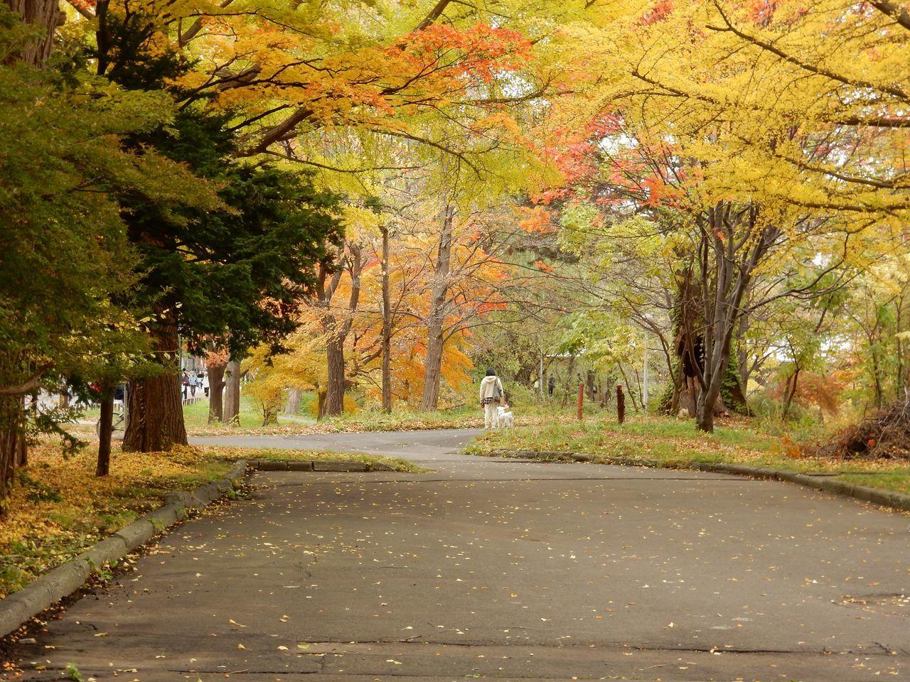 黄葉・紅葉に染まる北海道大学_c0025115_22365409.jpg