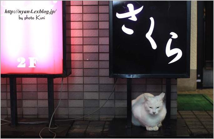 下町の白猫さん_f0166234_23111614.jpg