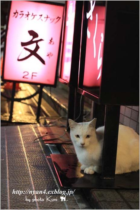 下町の白猫さん_f0166234_23135755.jpg