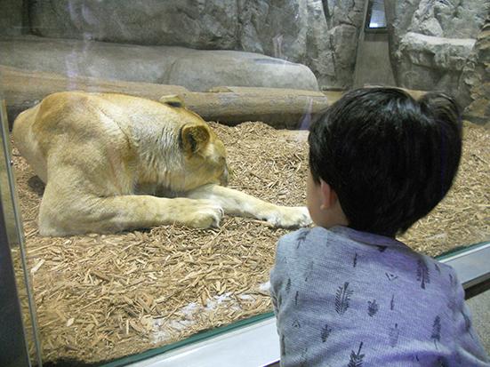 動物園を楽しめるように♪_a0275343_13383436.jpg
