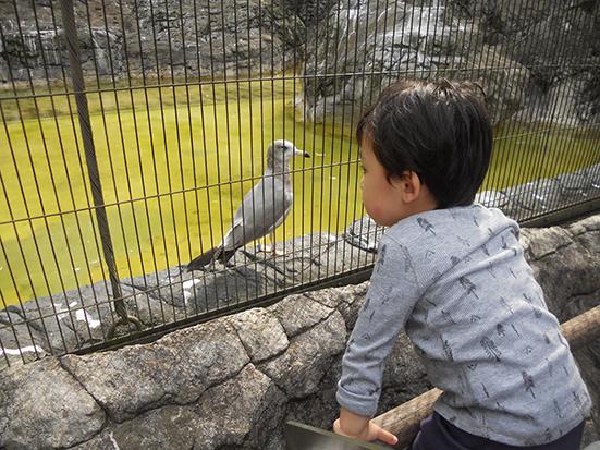 動物園を楽しめるように♪_a0275343_1341568.jpg