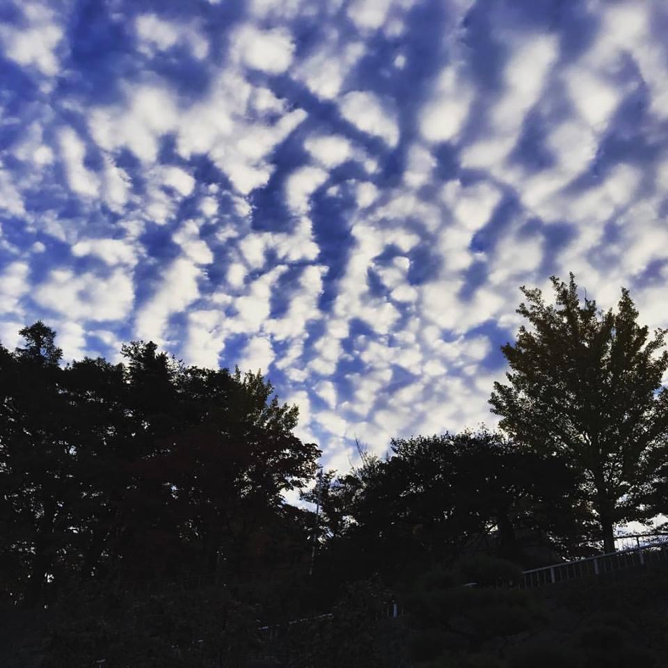 今日の青空と鱗雲_b0199244_1810357.jpg