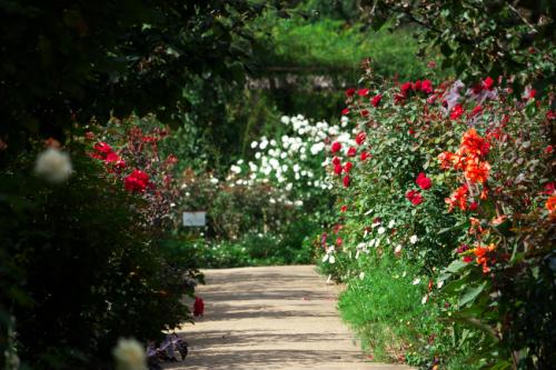 東武トレジャーガーデン館林の秋薔薇5_a0263109_16532345.jpg