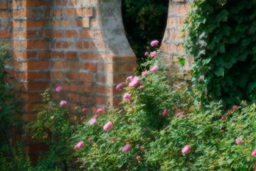 東武トレジャーガーデン館林の秋薔薇5_a0263109_16572969.jpg