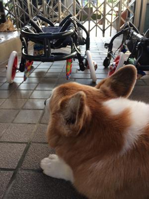 犬の車椅子のわんうぉーくさんより_d0169411_20323129.jpg