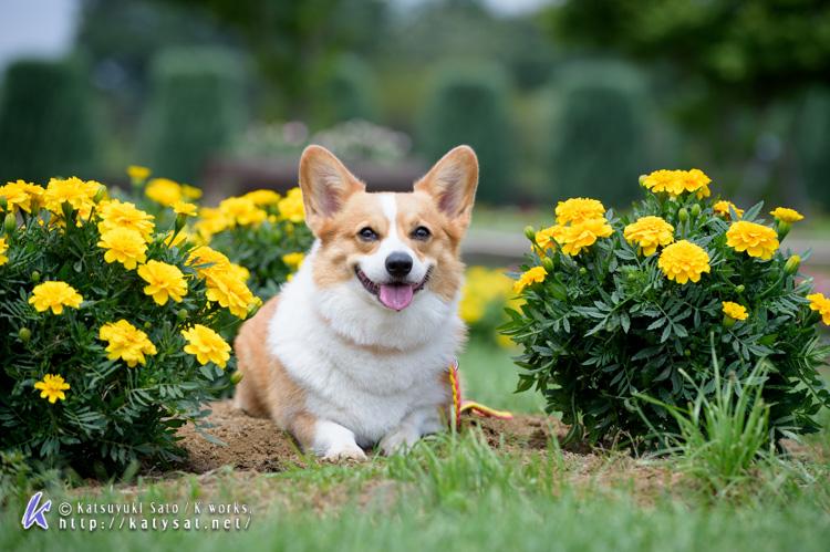 お花の中のSmileちゃん_d0102523_1563094.jpg